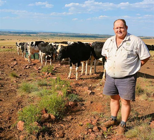 Anthony -Khourie -examines -heifers