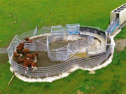 Cattleyard Designs: Te Pari Products: Animal Husbandry And Livestock Handling