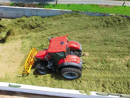 Stacking -grass -silage -in -the -bunker
